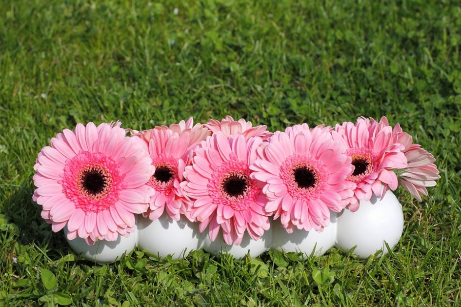 Astonishing And Interesting Facts About Gerbera